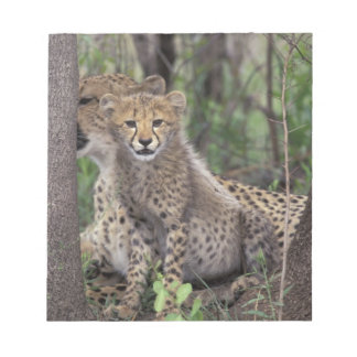 Africa, South Africa, Phinda Preserve. Cheetah Notepad