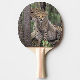 Africa, South Africa, Phinda Preserve. Cheetah Ping Pong Paddle