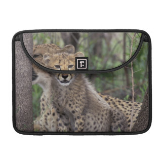 Africa, South Africa, Phinda Preserve. Cheetah Sleeve For MacBooks