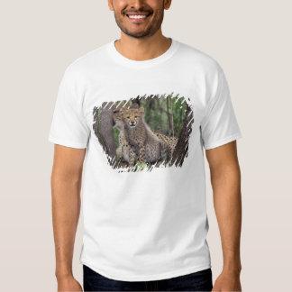 Africa, South Africa, Phinda Preserve. Cheetah Tshirt
