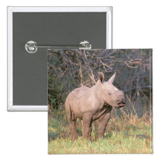 Africa, South Africa, Phinda Preserve. White 15 Cm Square Badge