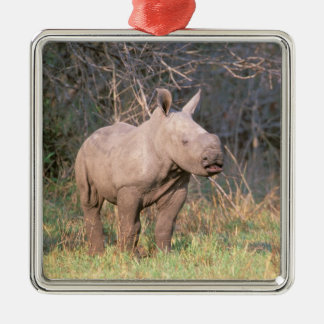Africa, South Africa, Phinda Preserve. White Christmas Ornament