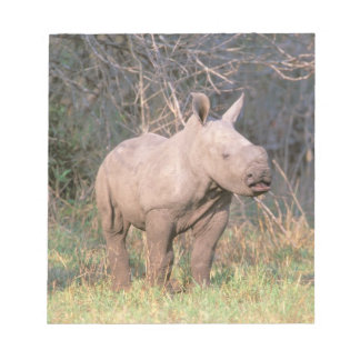 Africa, South Africa, Phinda Preserve. White Notepad