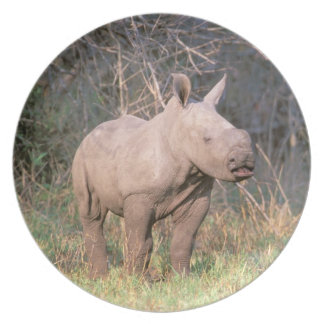 Africa, South Africa, Phinda Preserve. White Plate