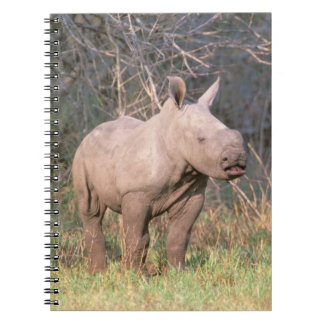 Africa, South Africa, Phinda Preserve. White Spiral Note Books