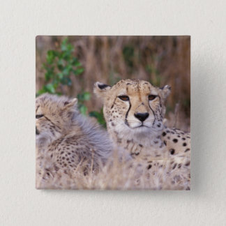 Africa, South Africa, Tswalu Reserve. Cheetahs 15 Cm Square Badge