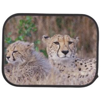 Africa, South Africa, Tswalu Reserve. Cheetahs Car Mat