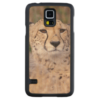 Africa, South Africa, Tswalu Reserve. Cheetahs Carved Maple Galaxy S5 Case