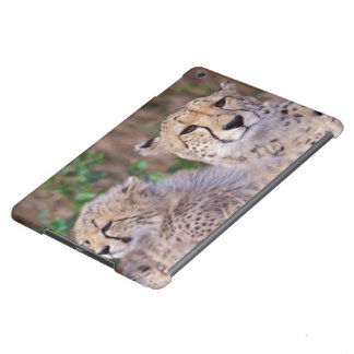 Africa, South Africa, Tswalu Reserve. Cheetahs Case For iPad Air