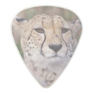 Africa, South Africa, Tswalu Reserve. Cheetahs Acetal Guitar Pick