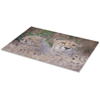 Africa, South Africa, Tswalu Reserve. Cheetahs Cutting Board