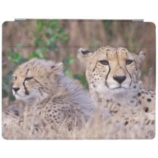 Africa, South Africa, Tswalu Reserve. Cheetahs iPad Cover