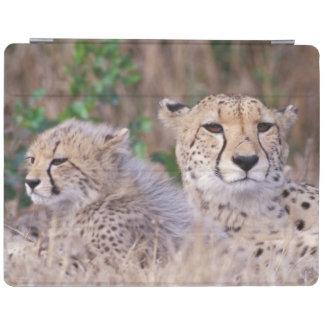 Africa, South Africa, Tswalu Reserve. Cheetahs iPad Cover