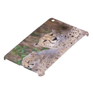 Africa, South Africa, Tswalu Reserve. Cheetahs iPad Mini Covers