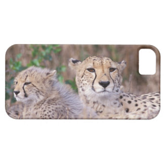 Africa, South Africa, Tswalu Reserve. Cheetahs iPhone 5 Cases