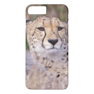 Africa, South Africa, Tswalu Reserve. Cheetahs iPhone 8 Plus/7 Plus Case
