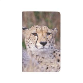 Africa, South Africa, Tswalu Reserve. Cheetahs Journal