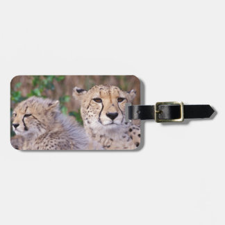 Africa, South Africa, Tswalu Reserve. Cheetahs Luggage Tag