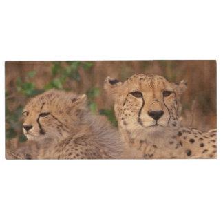 Africa, South Africa, Tswalu Reserve. Cheetahs Wood USB 2.0 Flash Drive