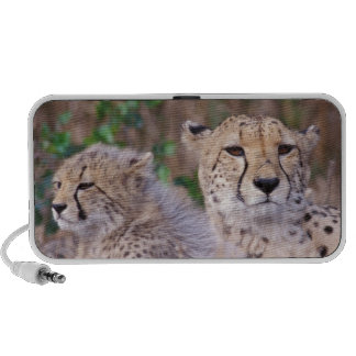 Africa, South Africa, Tswalu Reserve. Cheetahs Notebook Speakers