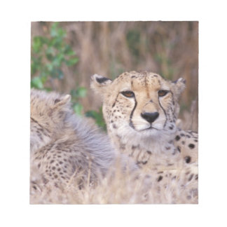 Africa, South Africa, Tswalu Reserve. Cheetahs Notepad