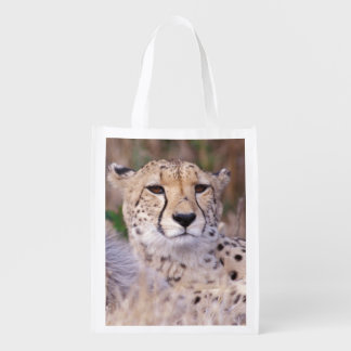 Africa, South Africa, Tswalu Reserve. Cheetahs Reusable Grocery Bag