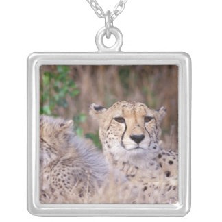 Africa, South Africa, Tswalu Reserve. Cheetahs Silver Plated Necklace