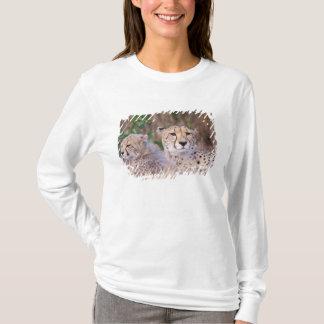 Africa, South Africa, Tswalu Reserve. Cheetahs T-Shirt