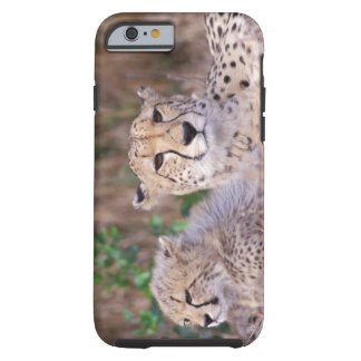 Africa, South Africa, Tswalu Reserve. Cheetahs Tough iPhone 6 Case