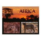 Africa Sunset & Big Cats Postcard