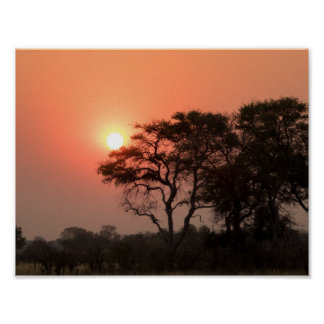 Africa Sunset Trees Nature Landscapes Skies Poster