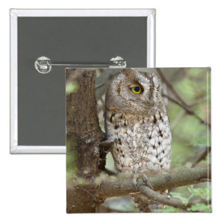 Africa. Tanzania. African Scops Owl at Tarangire 15 Cm Square Badge