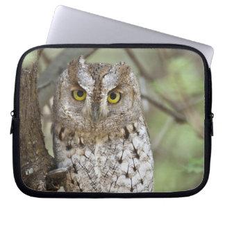 Africa. Tanzania. African Scops Owl at Tarangire 2 Laptop Sleeve