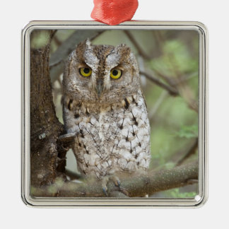 Africa. Tanzania. African Scops Owl at Tarangire 2 Silver-Colored Square Decoration