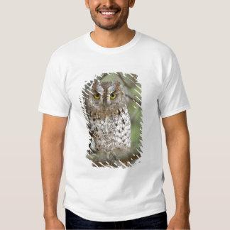 Africa. Tanzania. African Scops Owl at Tarangire 2 T-shirts