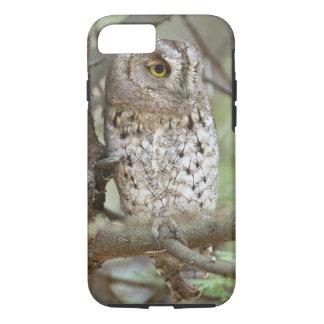 Africa. Tanzania. African Scops Owl at Tarangire iPhone 8/7 Case