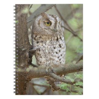 Africa. Tanzania. African Scops Owl at Tarangire Notebook