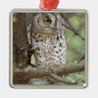 Africa. Tanzania. African Scops Owl at Tarangire Silver-Colored Square Decoration