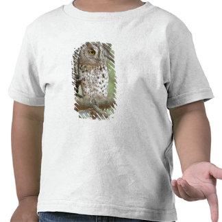 Africa. Tanzania. African Scops Owl at Tarangire Shirts