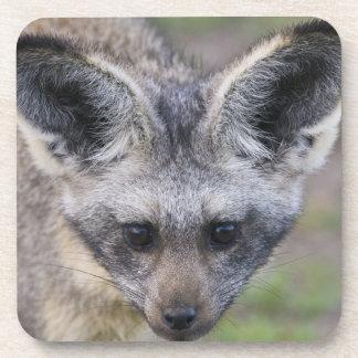 Africa. Tanzania. Bat-Eared Fox at Ndutu in the Coasters