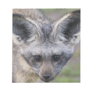 Africa. Tanzania. Bat-Eared Fox at Ndutu in the Notepad