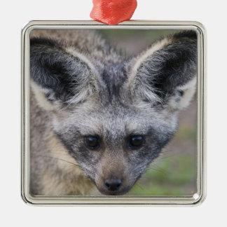 Africa. Tanzania. Bat-Eared Fox at Ndutu in the Silver-Colored Square Decoration