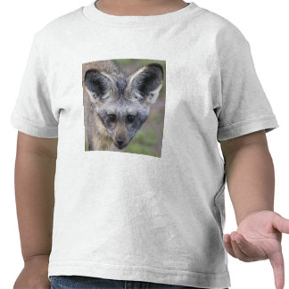 Africa. Tanzania. Bat-Eared Fox at Ndutu in the Tshirts