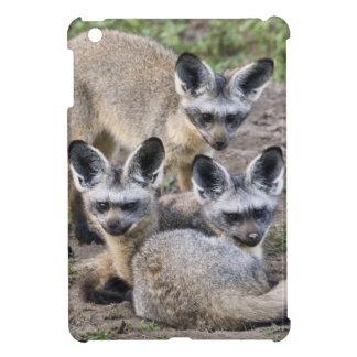 Africa. Tanzania. Bat-Eared Foxes at Ndutu in iPad Mini Covers