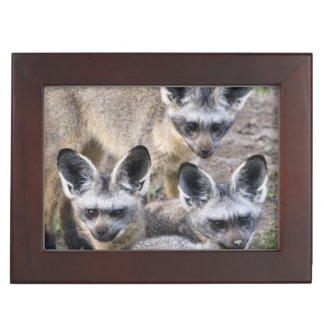 Africa. Tanzania. Bat-Eared Foxes at Ndutu in Keepsake Box