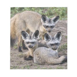 Africa. Tanzania. Bat-Eared Foxes at Ndutu in Notepad