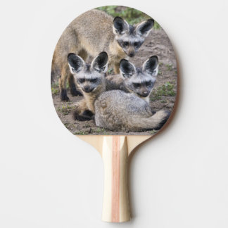 Africa. Tanzania. Bat-Eared Foxes at Ndutu in Ping Pong Paddle