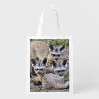 Africa. Tanzania. Bat-Eared Foxes at Ndutu in Reusable Grocery Bag