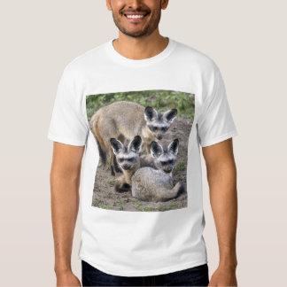 Africa. Tanzania. Bat-Eared Foxes at Ndutu in Shirt