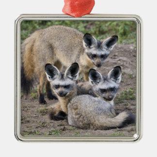 Africa. Tanzania. Bat-Eared Foxes at Ndutu in Silver-Colored Square Decoration
